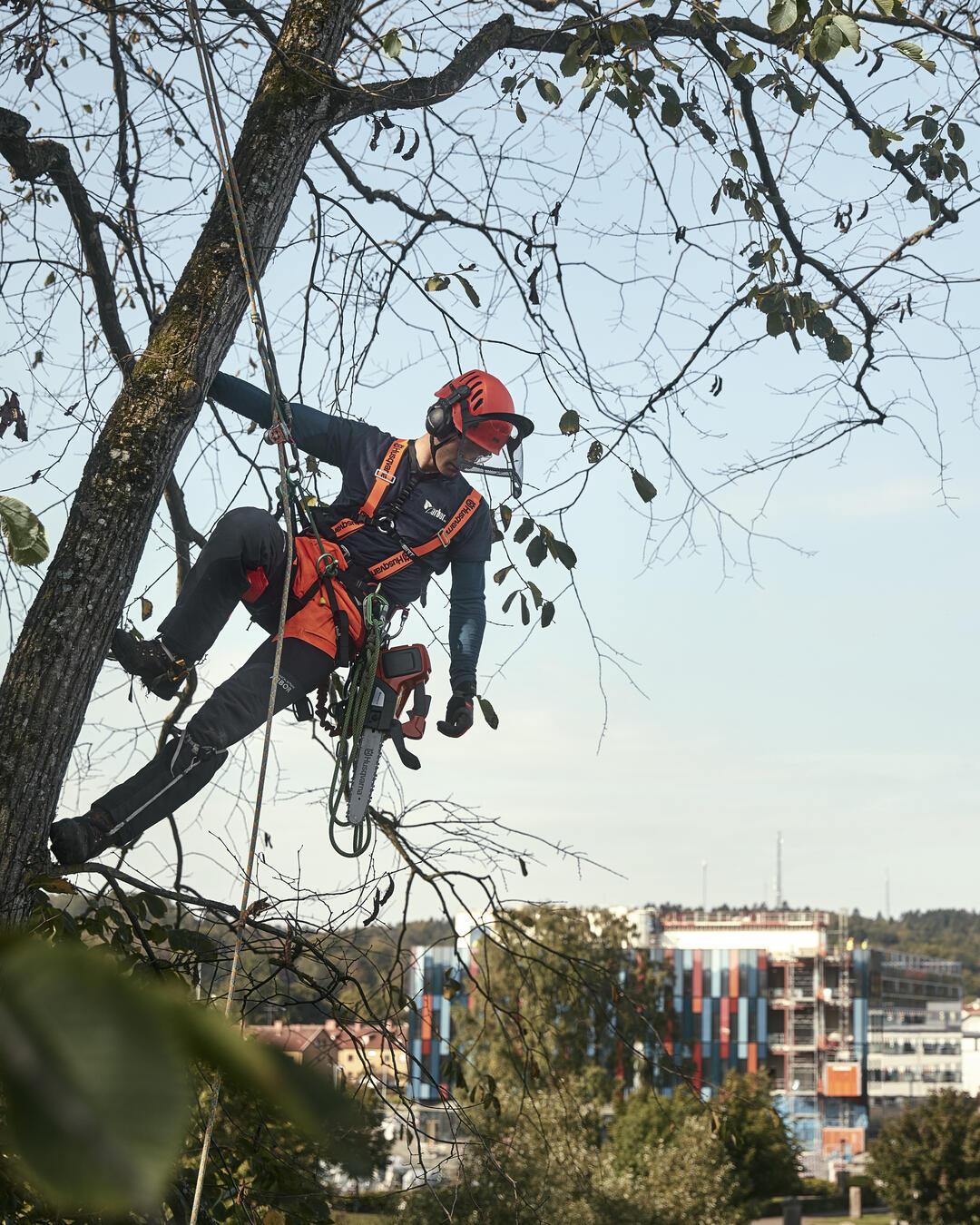 Tree Professional
